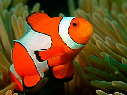 cownfish_what kind of aquarium should i get