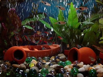 small_aquarium_what kind of aquarium should i get