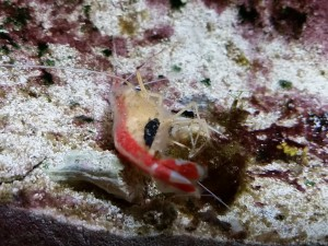 dead shrimp_4x3