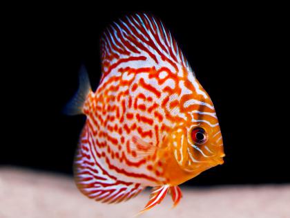 discus_what kind of aquarium should i get