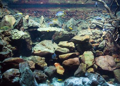 malawi aquarium_what kind of aquarium should i get