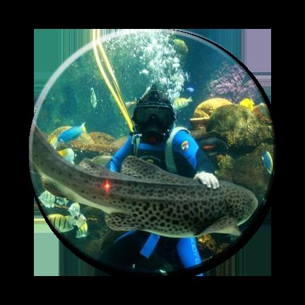 Fish Geeks Aquarium Maintenance Service