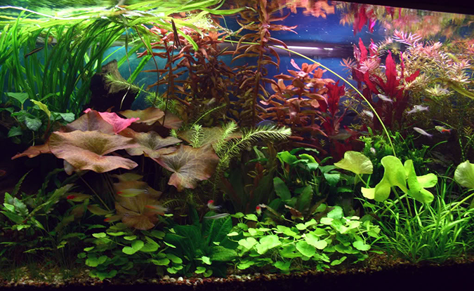 planted aquarium_Fish Geeks Aquarium Maintenance Service
