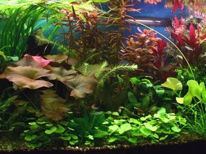 planted_what kind of aquarium should i get