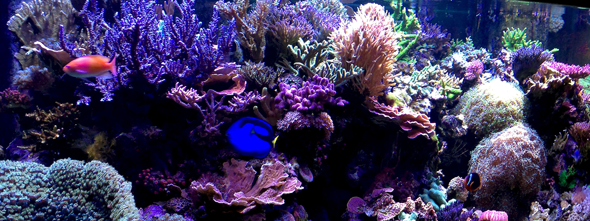 reef-tankB_16x6