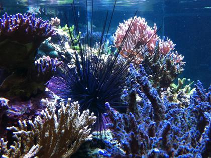reef_what kind of aquarium should i get
