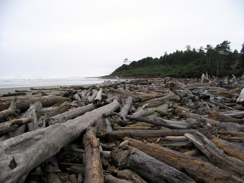 Driftwood_Expanse,_Northern_Washington_Coast